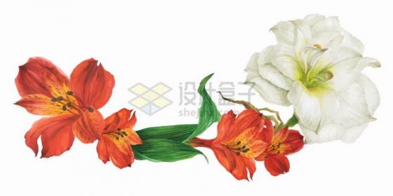 红色和白色百合花以及绿叶png图片免抠矢量素材