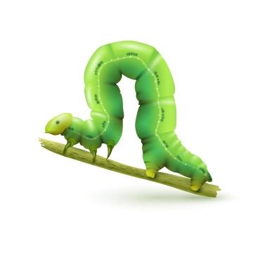 逼真的绿色毛毛虫昆虫免抠矢量图片素材