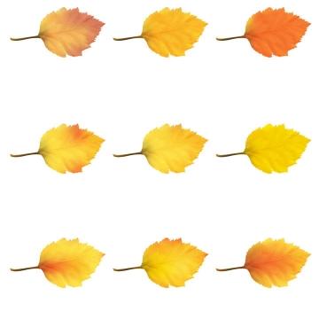 9款黄色的树叶秋天叶子图片免抠素材