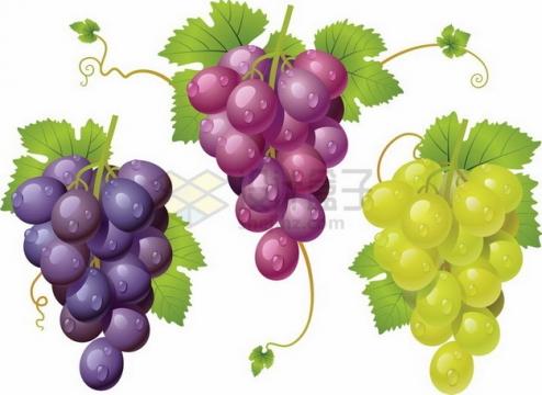 紫色红色青色葡萄png图片素材