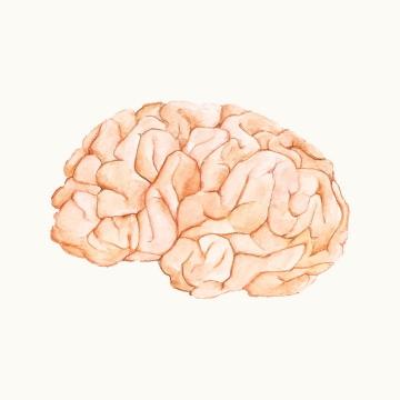 彩绘插画风格人体大脑免抠矢量图片素材