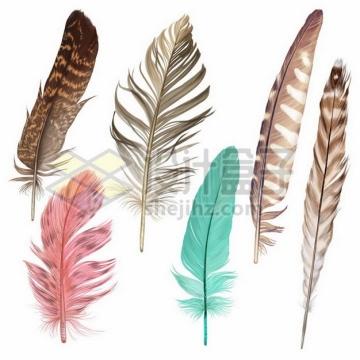 6款逼真的彩色羽毛鸟毛png图片素材