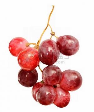 一串红高葡萄6329276png图片素材