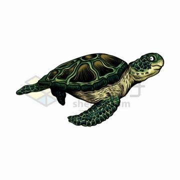 游泳中的绿海龟海洋生物野生动物png图片素材