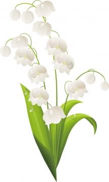 铃兰花白色小花朵124153png图片素材