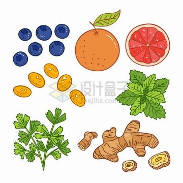蓝莓橘子橙子薄荷生姜等美味水果调味品手绘插画png图片免抠矢量素材