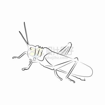蚂蚱蝗虫昆虫线条手绘插画png图片免抠矢量素材