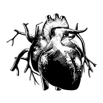 手绘黑白色风格人体器官心脏图片免抠素材