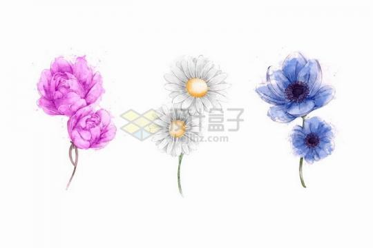 彩绘水彩画风格紫色的牡丹花雏菊和昙花等鲜花花朵png图片免抠矢量素材