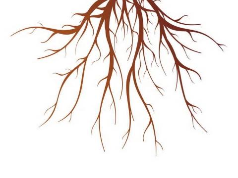 错综复杂的大树树根图片免抠素材