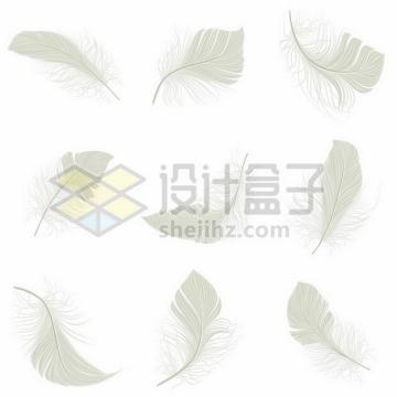 9款逼真的淡绿色羽毛绒毛鸟毛png图片素材