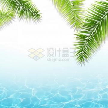 夏天的热带椰树叶和蓝色水面效果216568png图片素材