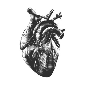 黑色素描风格心脏人体器官组织免扣图片素材