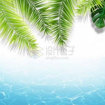 夏天的热带椰树叶和蓝色水面效果8493376png图片素材