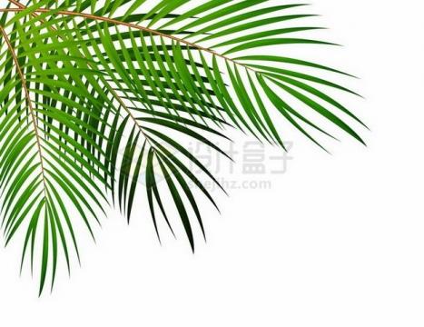 热带大树棕榈叶png图片免抠矢量素材