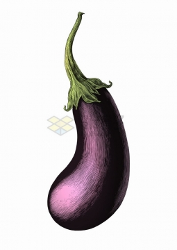 紫色茄子美味蔬菜彩色手绘素描插画png图片免抠矢量素材