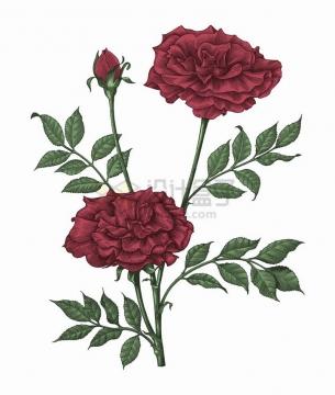 指头上的玫瑰花彩色手绘素描插画png图片免抠矢量素材