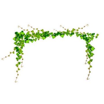 绿色树叶藤蔓装饰图片免抠素材