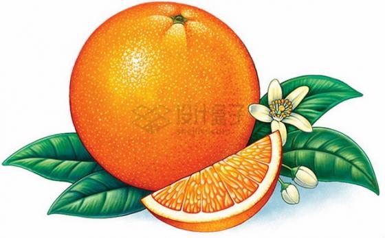 切开的红心柚子带叶子彩绘插画png图片素材
