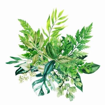 蕨类植物龟背竹等绿叶装饰水彩插画png图片素材2020040914