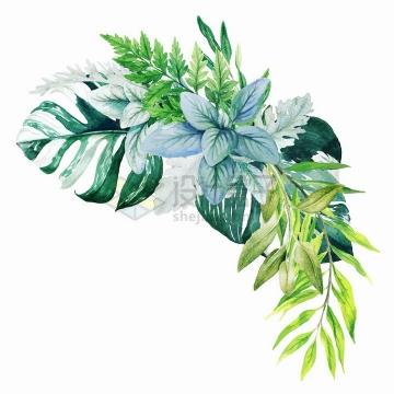 蕨类植物龟背竹的新鲜绿叶装饰水彩插画png图片素材2020040913