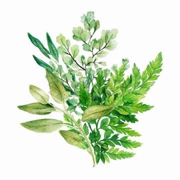 各种蕨类植物的绿叶装饰水彩画png图片素材2020040910