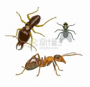 白蚁苍蝇和蚂蚁小昆虫png图片免抠矢量素材