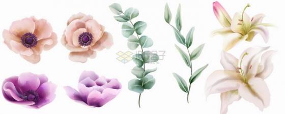 盛开的芙蓉花牡丹花百合花等鲜花水彩插画png图片素材