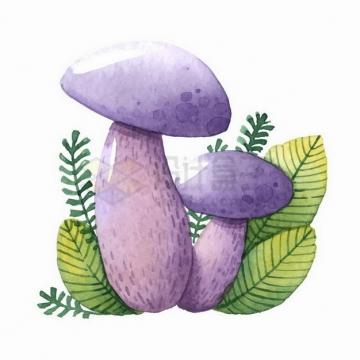 彩绘风格紫色的蘑菇和树叶png图片免抠矢量素材