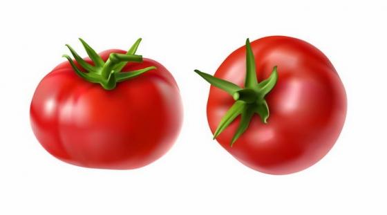 两个鲜红的西红柿番茄美味蔬菜png图片免抠EPS矢量素材