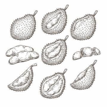 各种手绘风格的榴莲剥开的榴莲美味水果png图片免抠EPS矢量素材