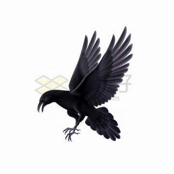 黑色乌鸦俯冲准备抓东西png图片素材