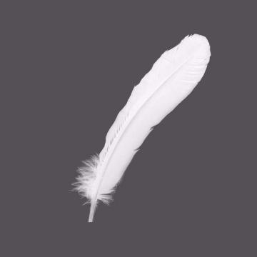 唯美风格的白色羽毛图片免抠素材