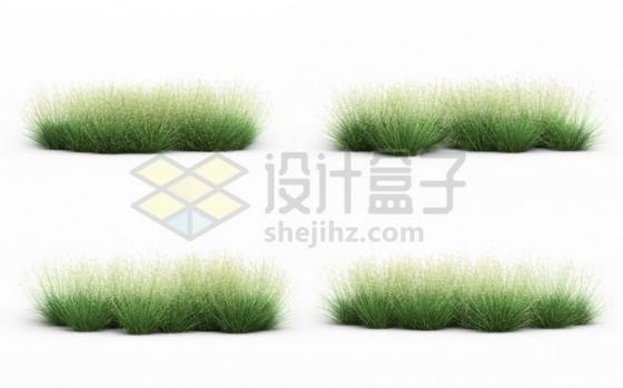 4款杂草野草紫羊茅草地草坪草丛草场456625psd/png图片素材