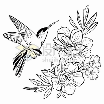 蜂鸟鲜花花朵手绘线条素描插画png图片免抠矢量素材
