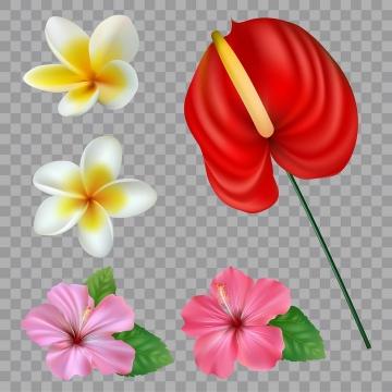 各种白色粉色红色的百合花花朵花卉鲜花图片免抠矢量素材