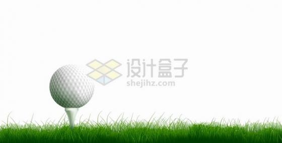 草坪上放在球座上的高尔夫球体育运动png图片素材