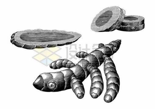 生姜切片调味品手绘素描插画png图片免抠矢量素材