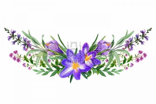 紫色桔梗绿叶野花鲜花花朵装饰彩绘插画png图片免抠矢量素材