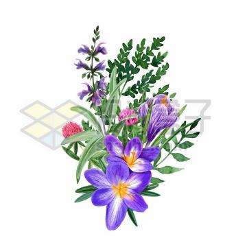 紫色桔梗刺儿菜野花鲜花花朵装饰彩绘插画png图片免抠矢量素材