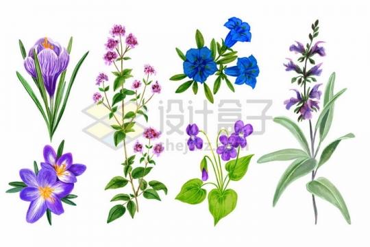 桔梗水仙花喇叭花等野花鲜花花朵装饰彩绘插画png图片免抠矢量素材