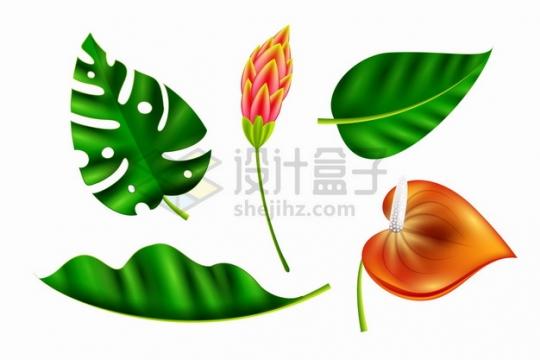 绿色的热带树叶和红掌花鲜花花朵装饰287543png图片素材