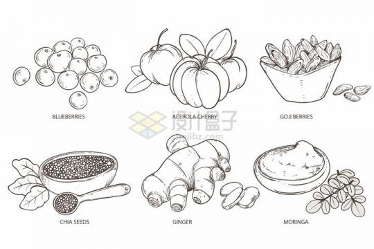 蓝莓南瓜枸杞奇亚籽生姜辣木等调味品手绘素描插画png图片免抠矢量素材