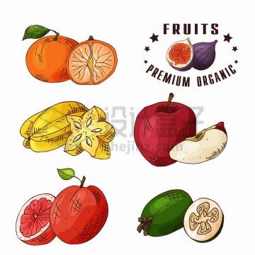 新鲜切开的橘子杨桃苹果橙子牛油果等美味水果彩绘插画png图片免抠矢量素材