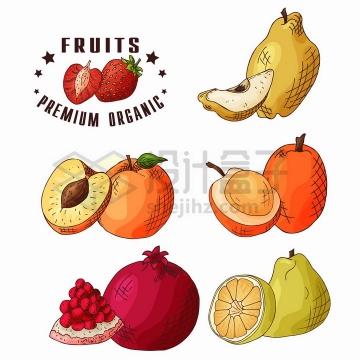 新鲜切开的梨子桃子杏子石榴橘子等美味水果彩绘插画png图片免抠矢量素材
