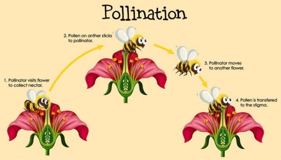 卡通蜜蜂给花朵授粉示意图png图片免抠矢量素材