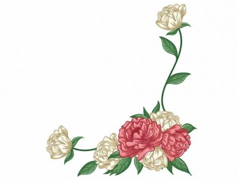 红色白色玫瑰花装饰手绘插画486388png矢量图片素材