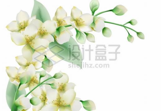 茉莉花白色花朵水彩画装饰png图片免抠矢量素材