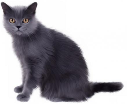 可爱的猫咪俄罗斯蓝猫664122png图片素材