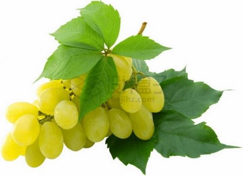 带叶子的白牛奶葡萄png图片素材